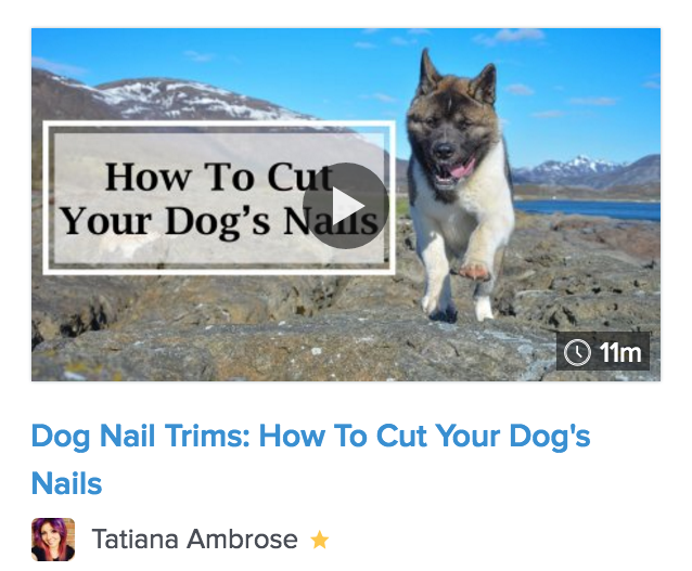 dog, dogs nails, how to cut dogs nail, dog black nails, dogs quick, how to stop dog nail bleeding, cutting black dog nails